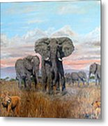 Elephants Warning To The Lions Metal Print