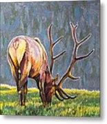 Elk Metal Print by Aaron Spong