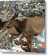 Elk And A Beetle Metal Print