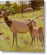 Elk And Calf Metal Print