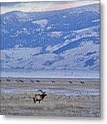 Elk At Dusk Metal Print
