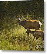 Elk Doe And Fawn-signed  #4465 Metal Print