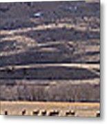 Elk Herd Below Sheep Mnt - 15x110 Metal Print
