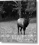 Elk In Black And White Metal Print
