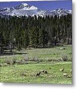 Elk In Meadow Metal Print by Tom Wilbert