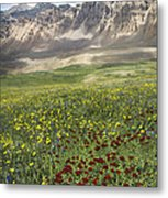 Elk Mountain Wildflowers Metal Print