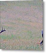 Elk On The Plains 1 Metal Print