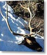 Elk Preservation. Metal Print