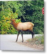 Elk Right Of Way Metal Print