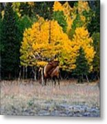 Elks Last Call Metal Print by Rebecca Adams