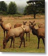 Elks Lodge Metal Print