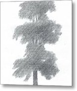 Elm Tree Drawing Number One Metal Print by Alan Daysh