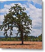 Elm Tree In Hay Field Art Prints Metal Print