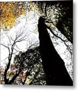 Elora Trees II Metal Print