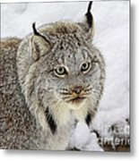 Elusive By Nature Metal Print by Inspired Nature Photography Fine Art Photography
