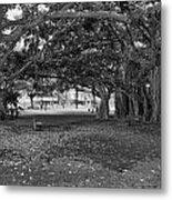 Embraced By Trees Metal Print