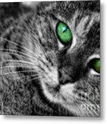 Emerald Eyes Cat  Metal Print