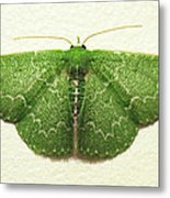 Emerald Moth Metal Print