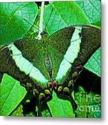 Emerald Swallowtail Butterfly Metal Print
