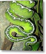 Emerald Tree Boa Metal Print