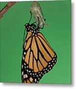 Emergence I Metal Print by Clarence Holmes