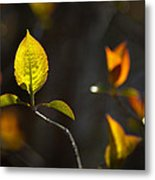 Emerging From The Darkness Metal Print