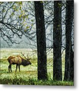 Emerging From The Fog Metal Print by Priscilla Burgers