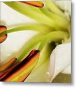 Emerging In Color Metal Print