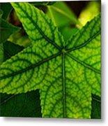 Emerging Greens Metal Print