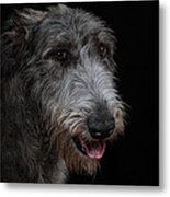 Irish Wolfhound II Metal Print