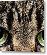 Emmy Eyes Metal Print
