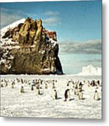 Emperor Penguin Colony Cape Washington Antarctica Metal Print