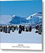 Emperor Penguin Rookery Metal Print by David Barringhaus