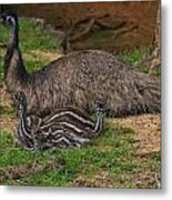 Emu And Chicks Metal Print