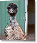 Emu Metal Print