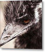 Emu Closeup Metal Print by Karol Livote