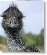 Emu Gaze Metal Print