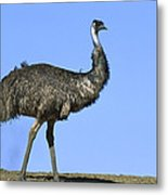 Emu Portrait Sturt National Park Metal Print