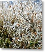 Encased In Ice Metal Print
