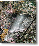 Enchanted Forest - Featured In Wildlife Group Metal Print