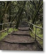 Enchanted Forest Garajonay National Park La Gomera Spain Metal Print