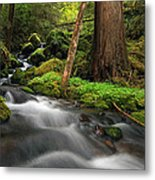 Enchanted Forest Metal Print by Pamela Winders