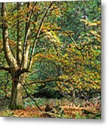 Enchanted Forest Tree Metal Print