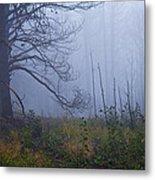 Enchanted Mist - Casper Mountain - Casper Wyoming Metal Print