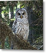 Encounter With An Owl Metal Print by Heike Ward