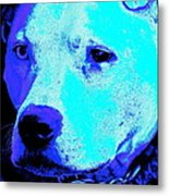 End Dog Fighting  Metal Print by Q's House of Art ArtandFinePhotography
