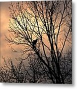 End Of The Day  Red Tailed Hawk Metal Print