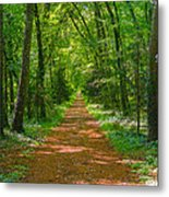 Endless Trail Into The Forest Metal Print