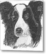 English Border Collie Metal Print by Catherine Roberts