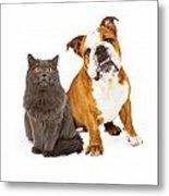 English Bulldog And Gray Cat Metal Print